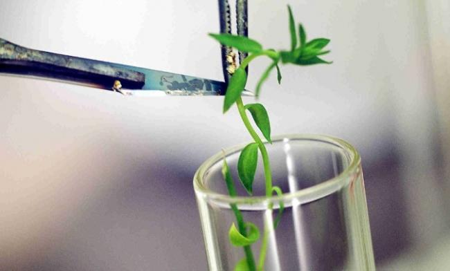 plant research paper The journal of plant research is an international publication that gathers and disseminates fundamental knowledge in all areas of plant sciences coverage extends to every corner of the field.