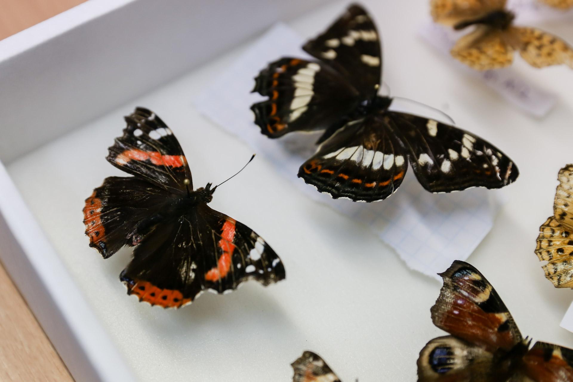 Ученые ВятГУ составили перечень насекомых региона