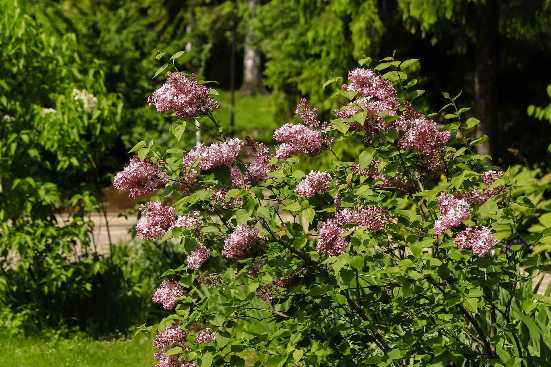 Ботанический сад ВятГУ